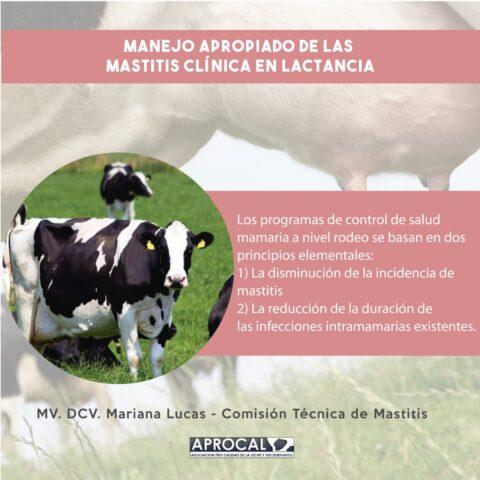 MANEJO APROPIADO DE LAS MASTITIS CLÍNICA EN LACTANCIA